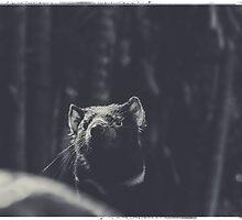 Devil In The Dark by jentbrave