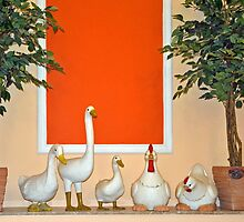 Poultry collection by Arie Koene