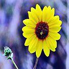 Wild Sunflower by marilyn diaz