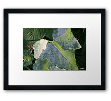 LEAVES IN LIGHT AND SHADOW Framed Print