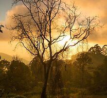 Sunrise Through The Mist by Steve Bass