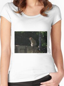 Ginger cat on garden fence Women's Fitted Scoop T-Shirt