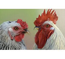 Hen & Rooster Photographic Print