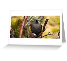 Black currawong resting on a tree branch Greeting Card