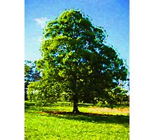 Sunlit Tree Photographic Print