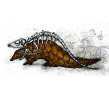 Pangolin Photographic Print