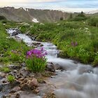 Colorado Wildflowers - Rocky Mountain Stream and Parry's Primrose by RobGreebonPhoto