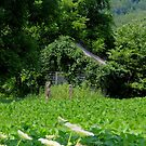 Old Log Cabin Covered with Vines by TrendleEllwood