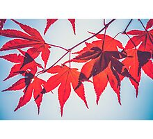 Autumn Red Leaves Photographic Print