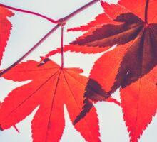 Autumn Red Leaves Sticker