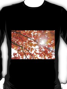 Maple leaves in autumn T-Shirt
