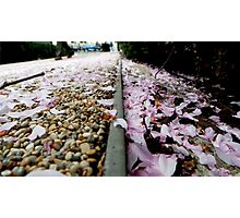 Petal Pink & Pebble Perspective Photographic Print