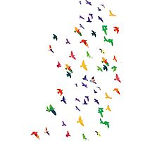 Colorful flying birds group Photographic Print