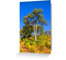 Cork-Oak Greeting Card