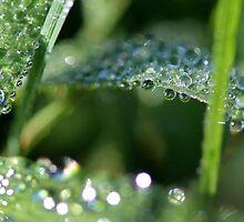 Raindrops Keep Falling by Carolyn  Fletcher