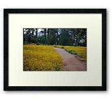 Field Of Dreams ! Framed Print