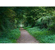 English Green Woodland  Photographic Print