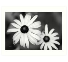 Black White Daisy Art Print
