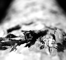 Bark Textures Black and White by livmaggio