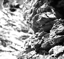 Bark Textures Black and White 2 by livmaggio