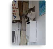 Cat on a postbox Canvas Print