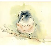 Long Tailed Titmouse Photographic Print