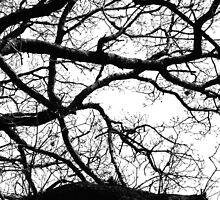 Silhouetted Branches by livmaggio