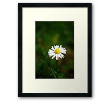 Daisy, Daisy. . . . Framed Print