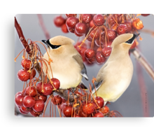 Feathers and Cherries Metal Print