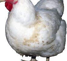 chicken by geot