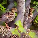 Two Wild Turkey Poults by Yannik Hay