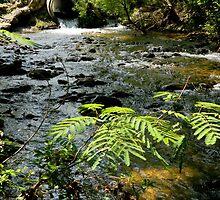 Rushing Brook by ctheworld