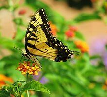 Butterfly Too by Alberto  DeJesus