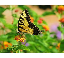 Butterfly Too Photographic Print