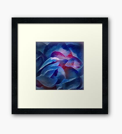 Pink and blue cosmos Framed Print