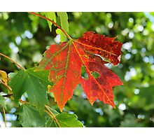 First sign of Autumn Photographic Print