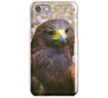 Harris hawk iPhone Case/Skin