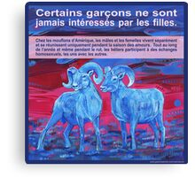 Ram tough (Le mouflon d'Amérique) Canvas Print