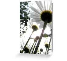Award Winner - Daisies Greeting Card