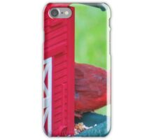 Cardinal Peek a Boo iPhone Case/Skin