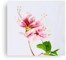 The Wild Azalea Canvas Print