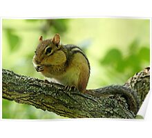 Chipmunk Cheeks Poster