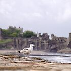 Gulls at St Andrews Castle by Kasia-D