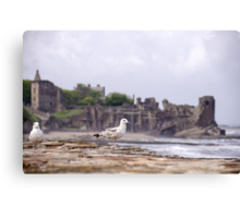 Gulls at St Andrews Castle Canvas Print