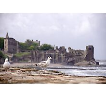 Gulls at St Andrews Castle Photographic Print