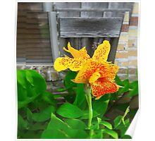 Flower 6 Poster