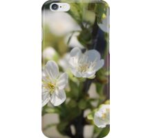 More cherry flowers iPhone Case/Skin