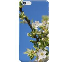 Flowers of cherry iPhone Case/Skin