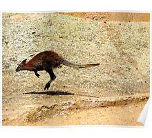 Jumping Wallaby Poster