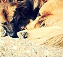 Stray dog of Pompeii Sticker